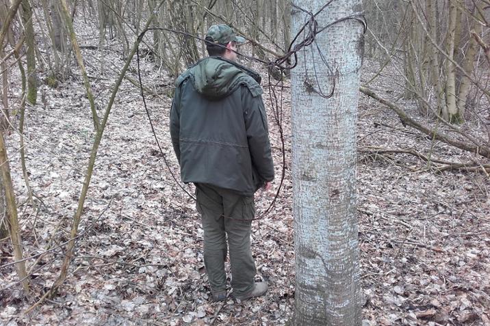 Wnyk przymocowany do drzewa. Foto. Krzysztof Miszkiel